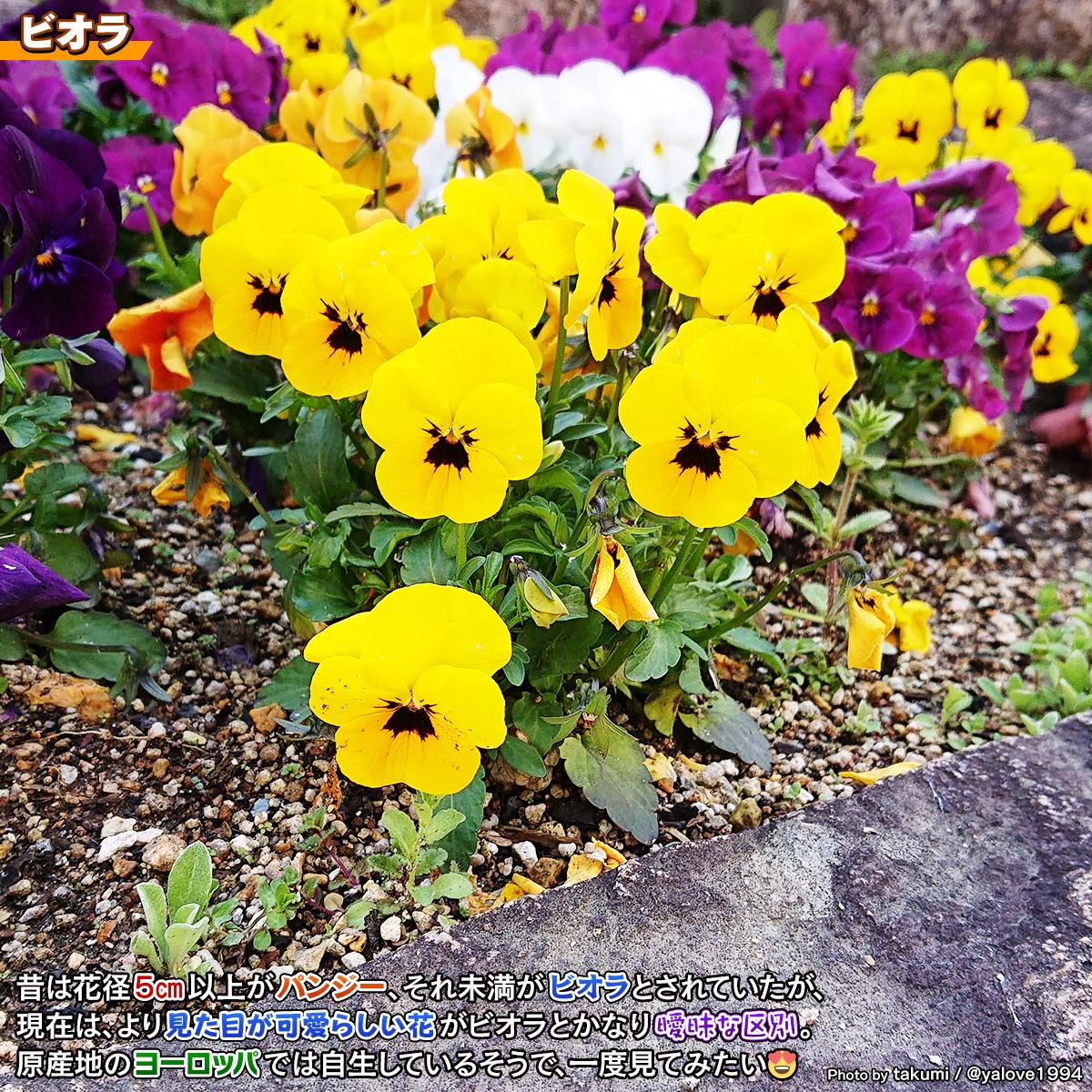 DSC_4090_20210424165138e1d.jpg