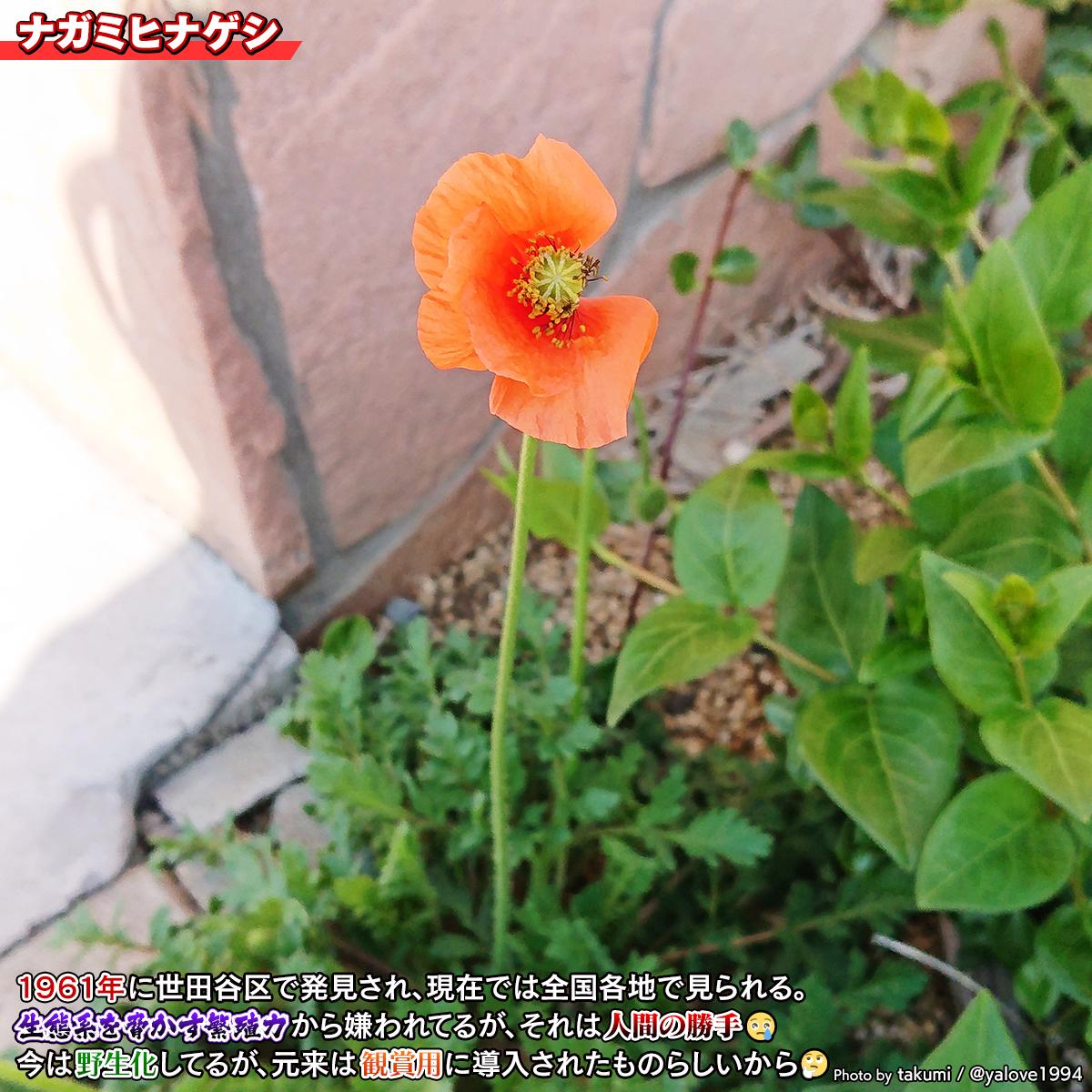 DSC_4100a.jpg