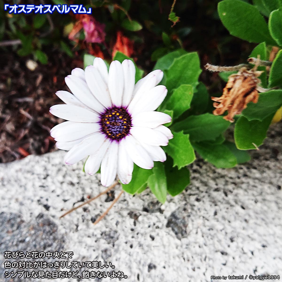 DSC_4193.jpg