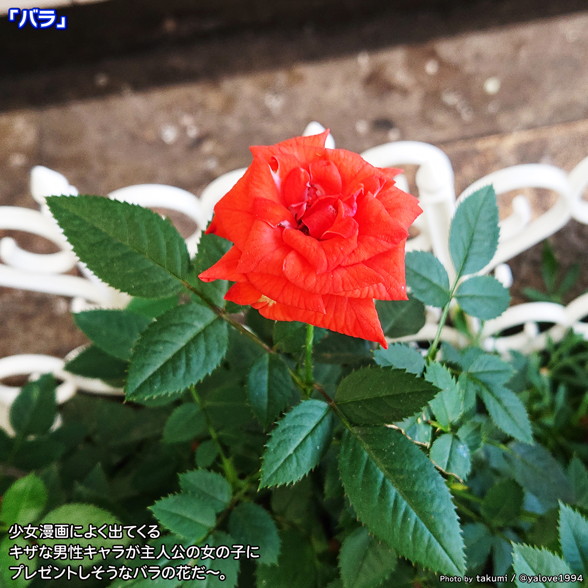 DSC_4389.jpg