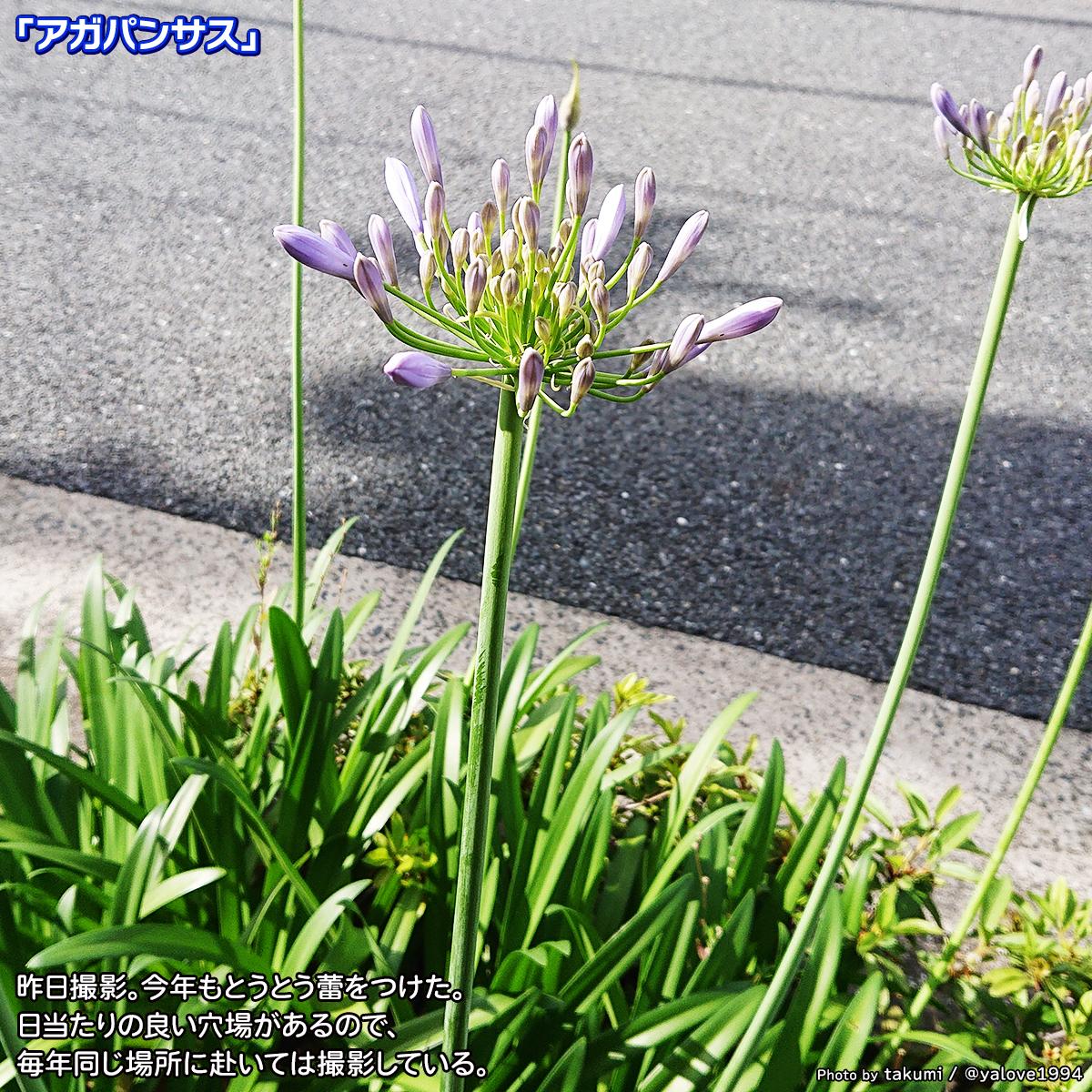 DSC_4399.jpg