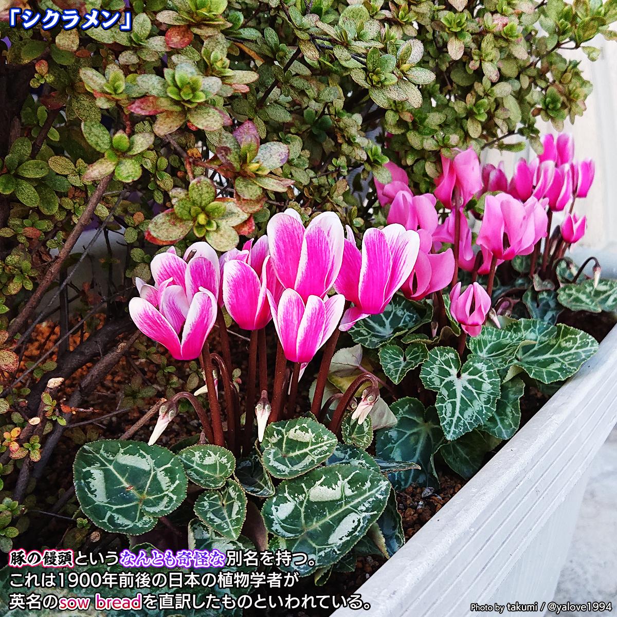 DSC_4624b.jpg