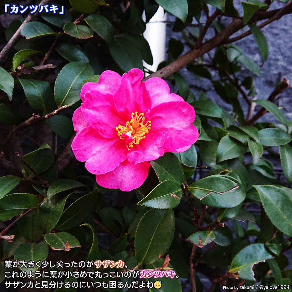 DSC_4676_20201208154313a13.jpg