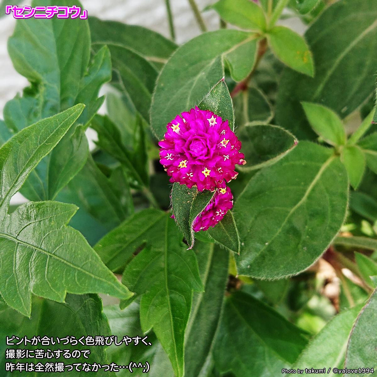 DSC_4695_2020070217001380f.jpg