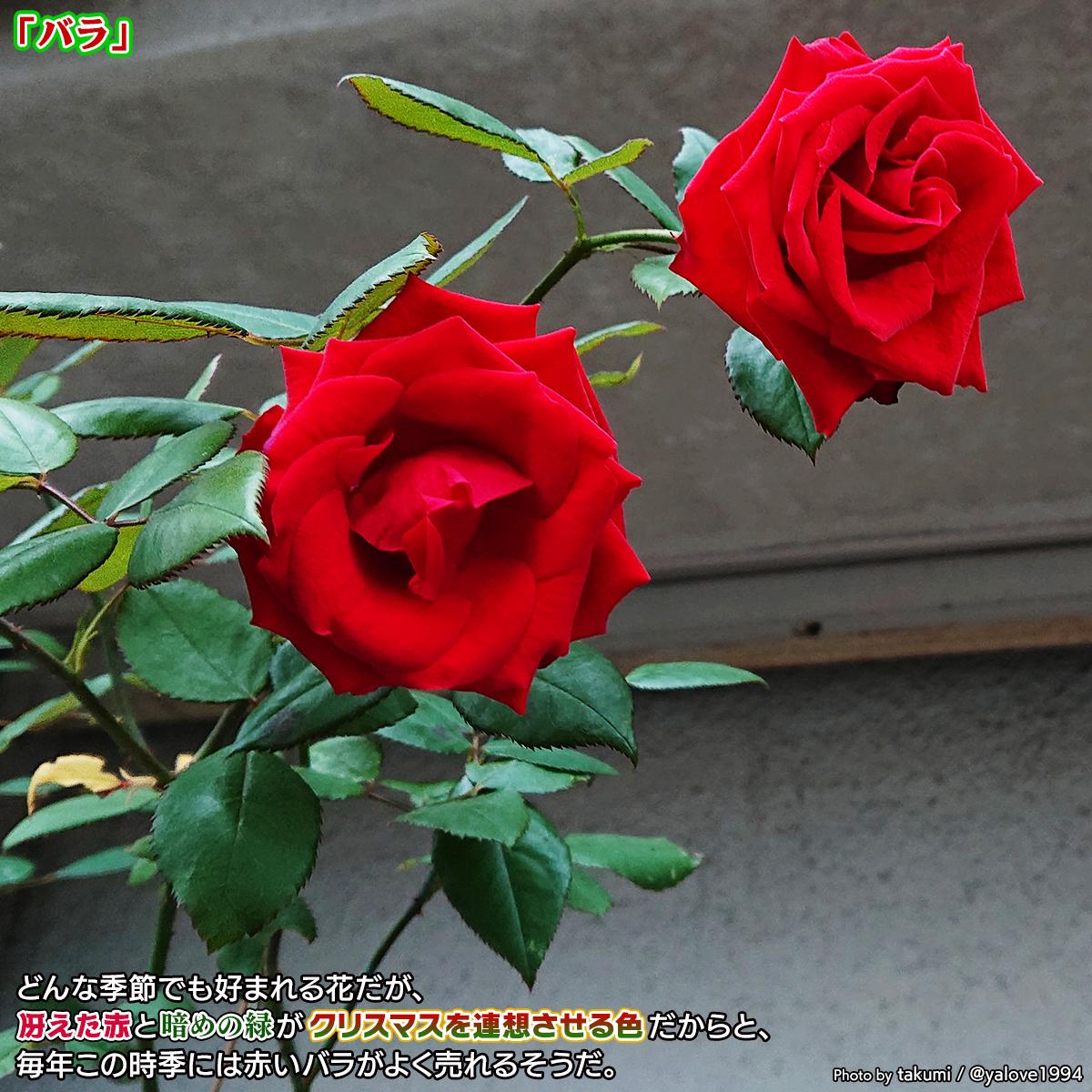 DSC_4758_20201223144201f69.jpg