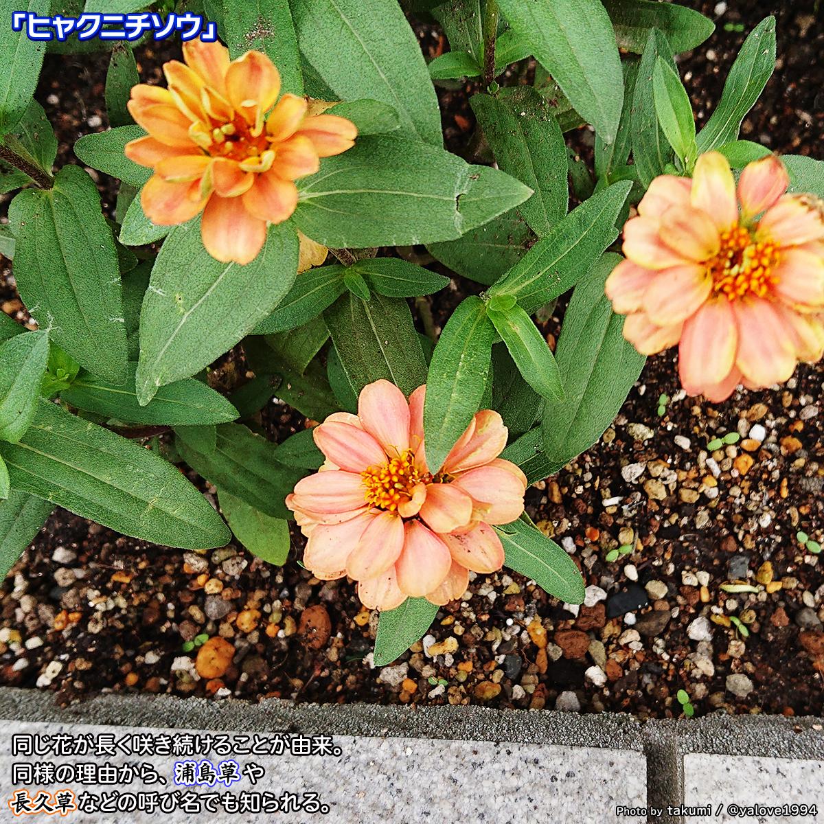 DSC_4823.jpg