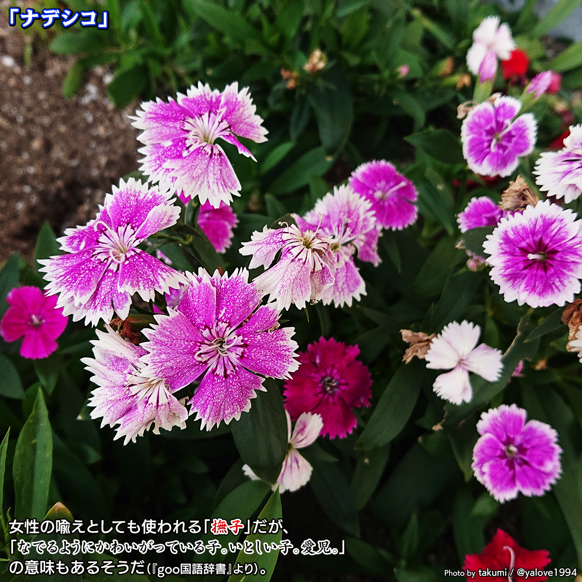 DSC_4878.jpg