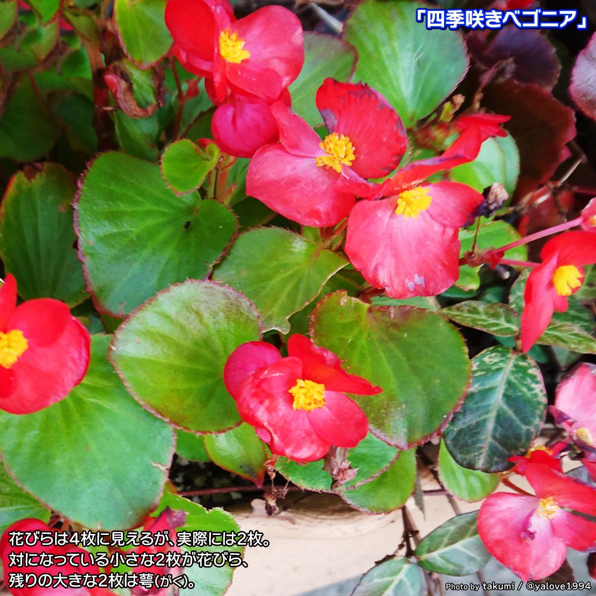 DSC_4901_2020091123573366f.jpg