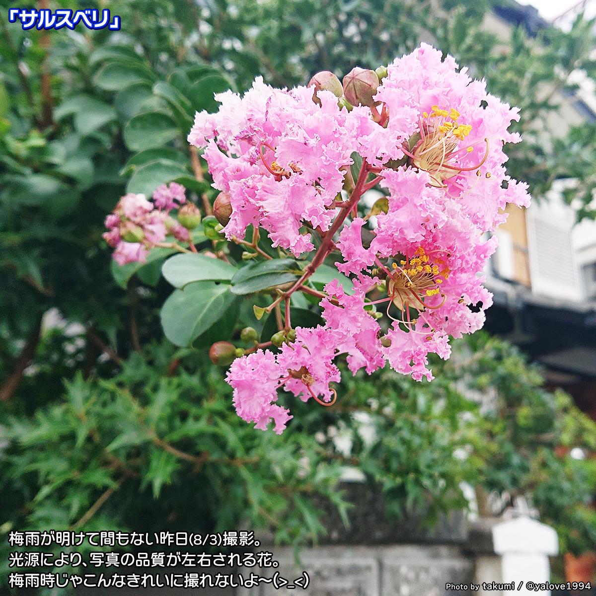 DSC_5174_2020080419590354b.jpg
