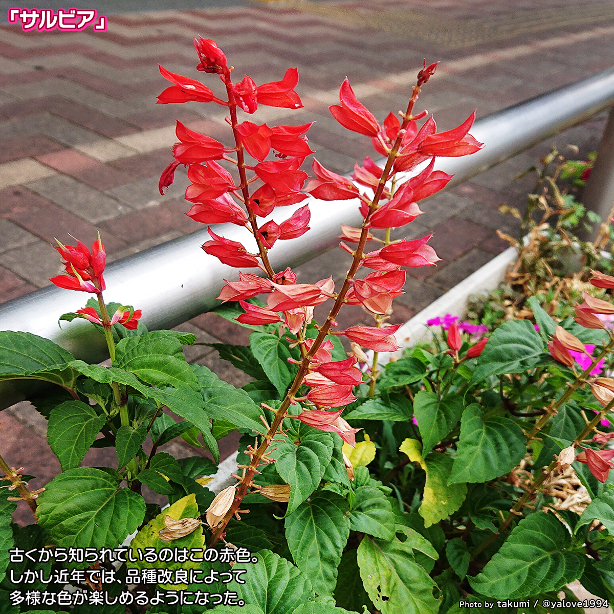 DSC_5228.jpg