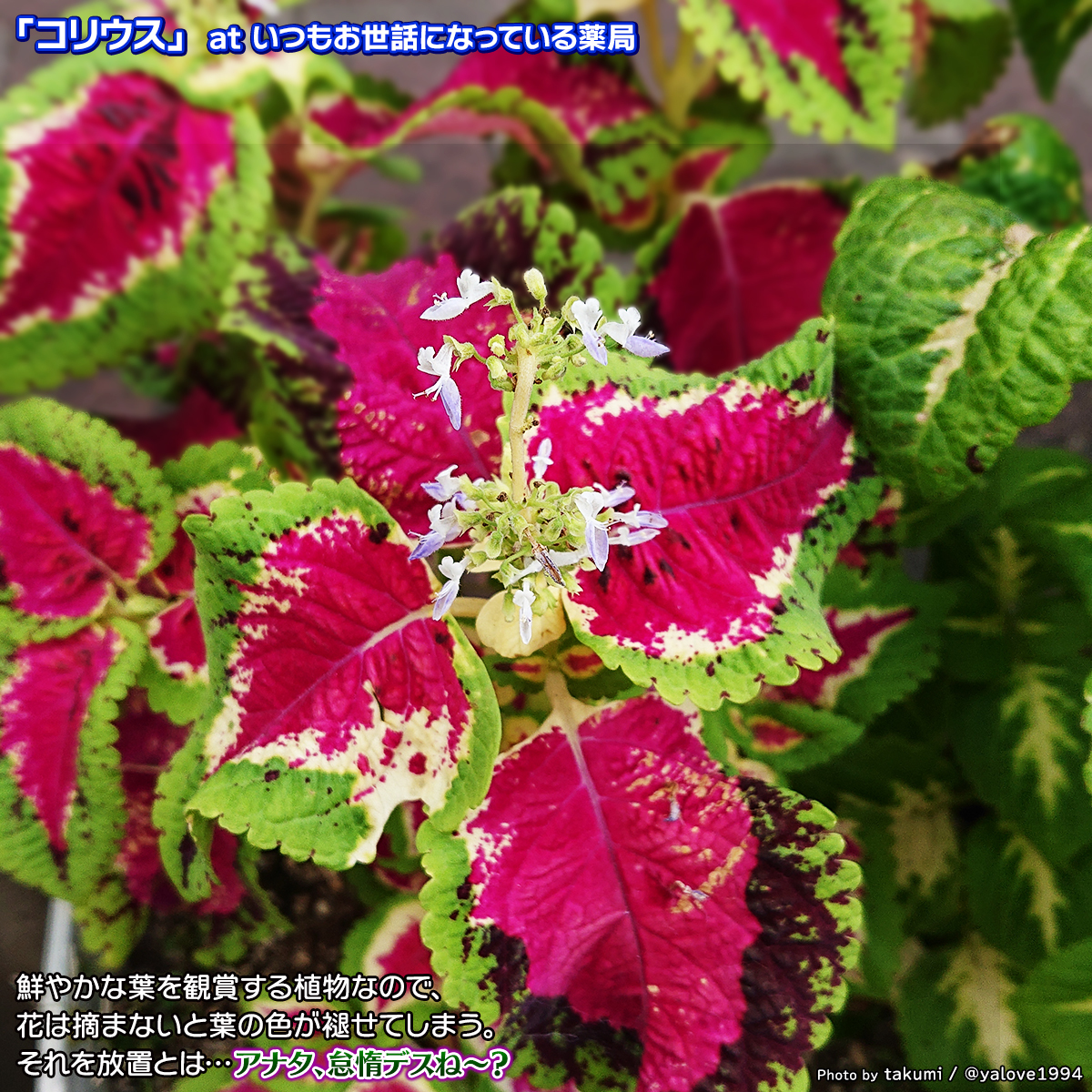 DSC_5230_20200808085512bcb.jpg