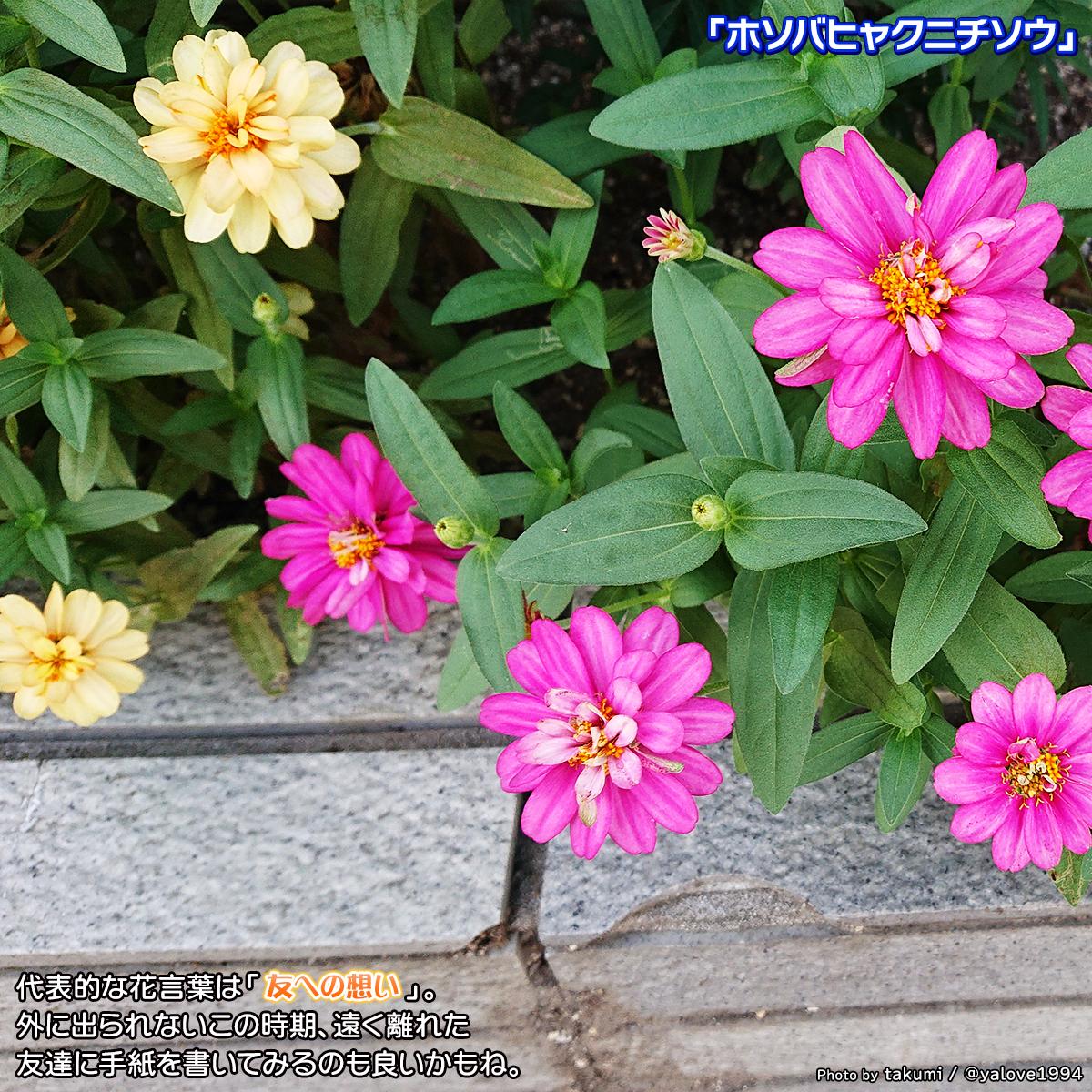 DSC_5282.jpg