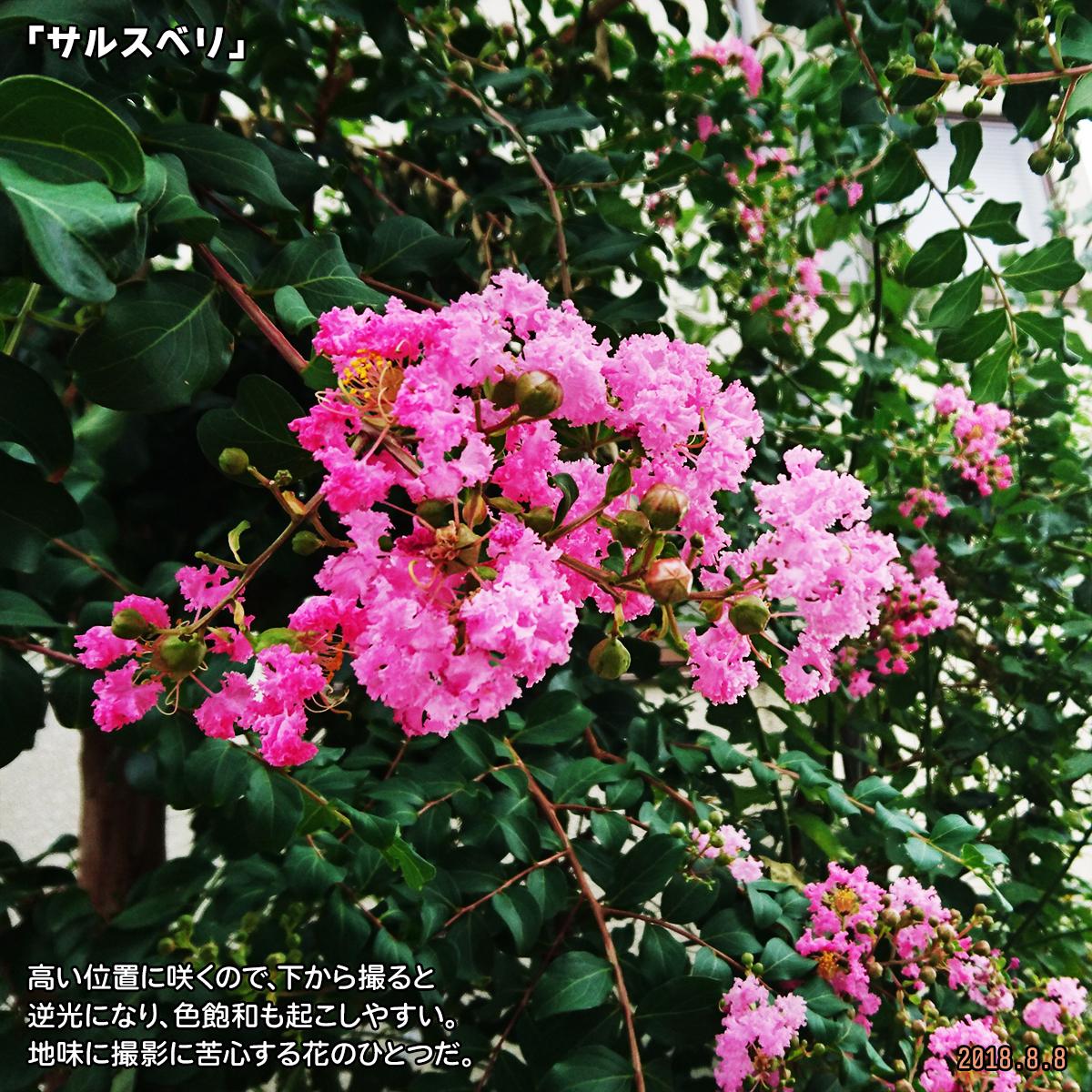 DSC_7887_20200313150127ab4.jpg