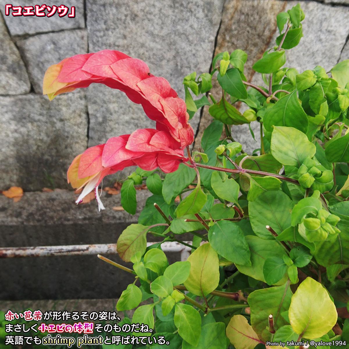 DSC_8644.jpg