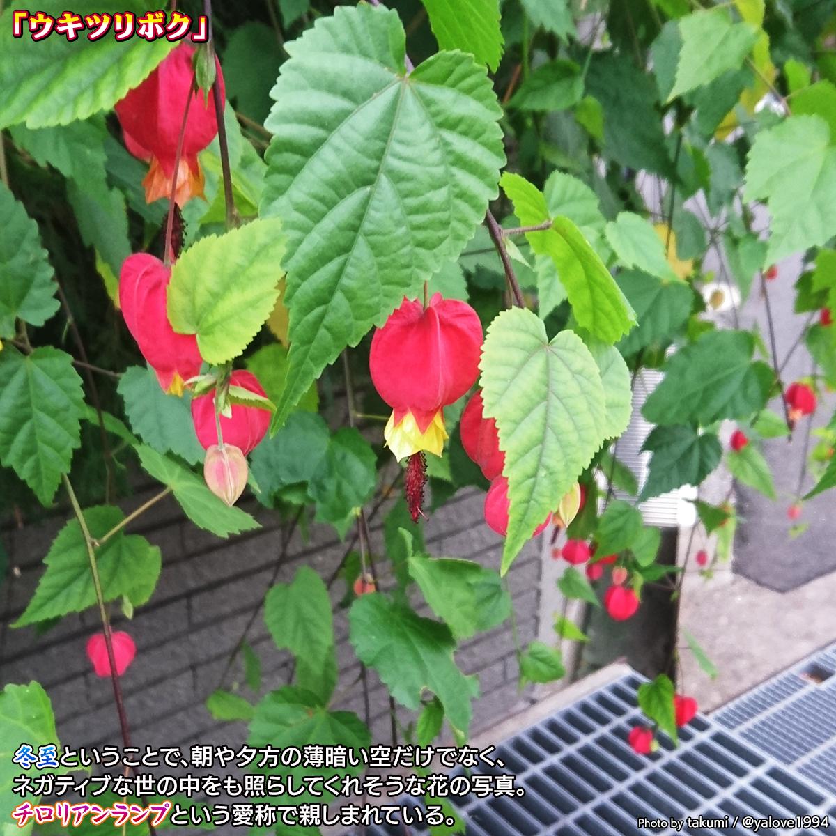 DSC_8767_202012211723481c7.jpg