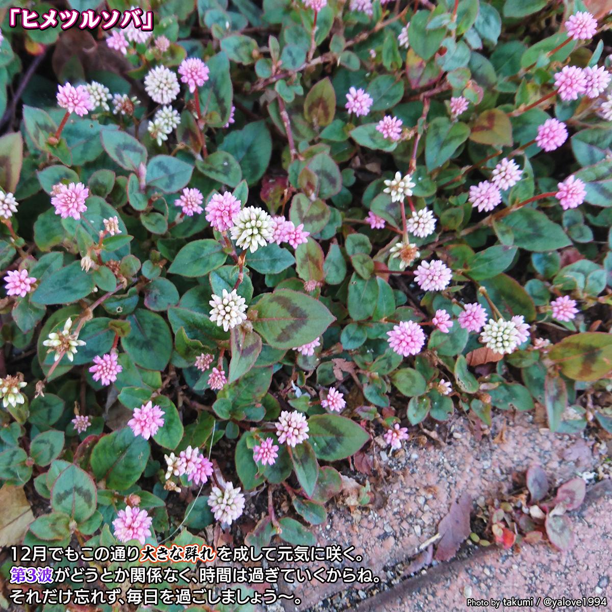 DSC_8821a.jpg