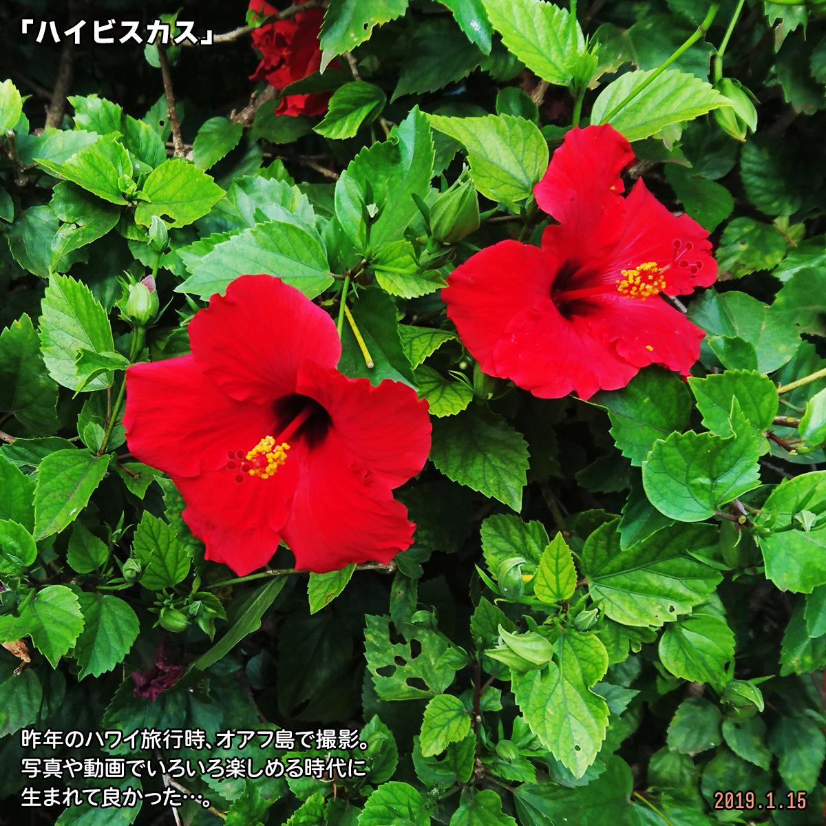 DSC_9123.jpg