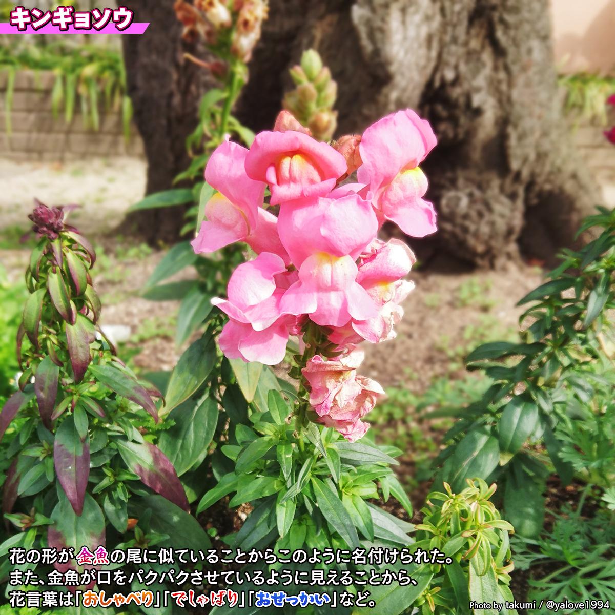 DSC_9732c.jpg