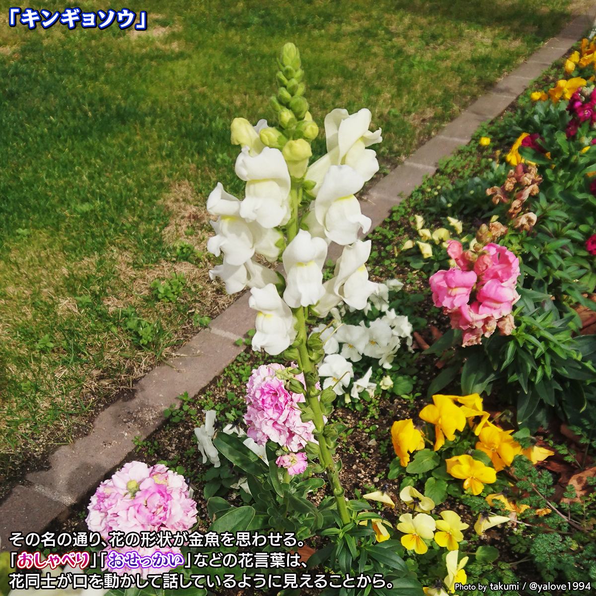DSC_9735.jpg