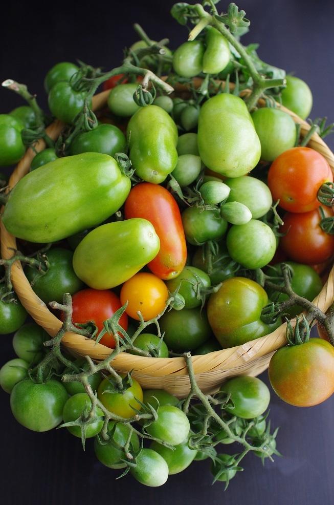 トマト追熟