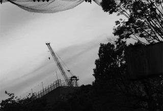 200415_crane.jpg