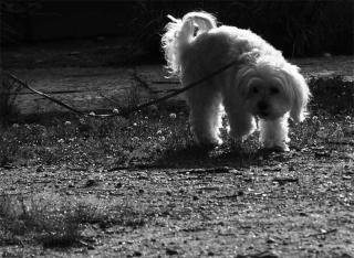 200702_dog_01bw.jpg