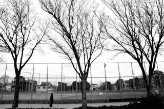 210228_shioepark_tree_01bw.jpg