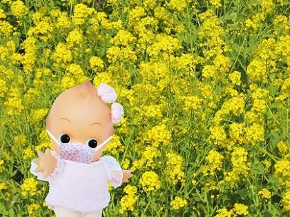 マスクをしてお散歩です 菜の花