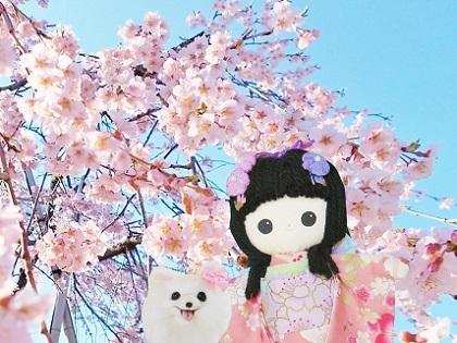 枝垂れ桜 2020h