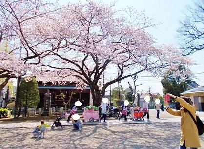 桜散歩の子供達