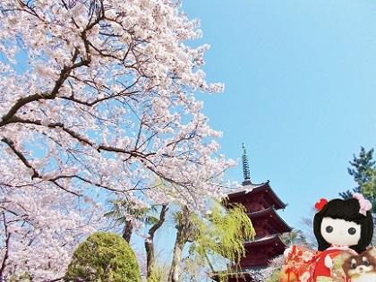 桜の五重塔 2020