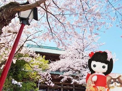 美しい桜 2020