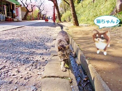 猫ちゃん2020