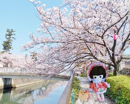 楽しい桜お散歩