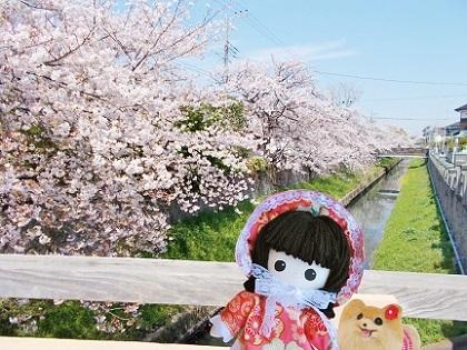 桜と小川と記念写真