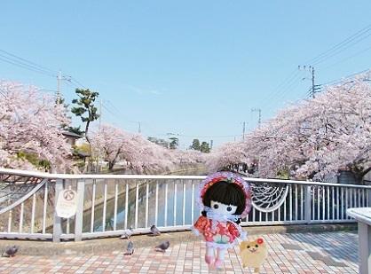 桜と印象的な橋