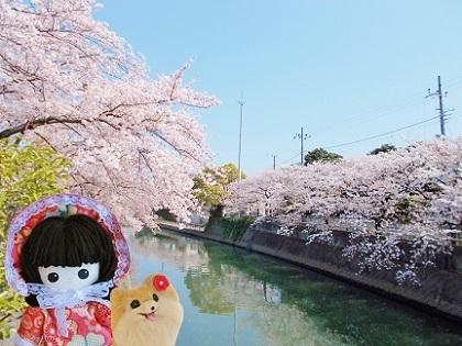 美しい桜川