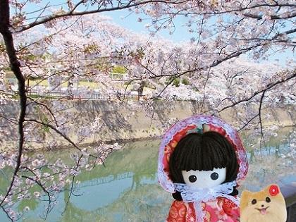 美しい桜と水面を