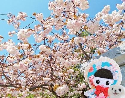 八重桜も咲きました 2020