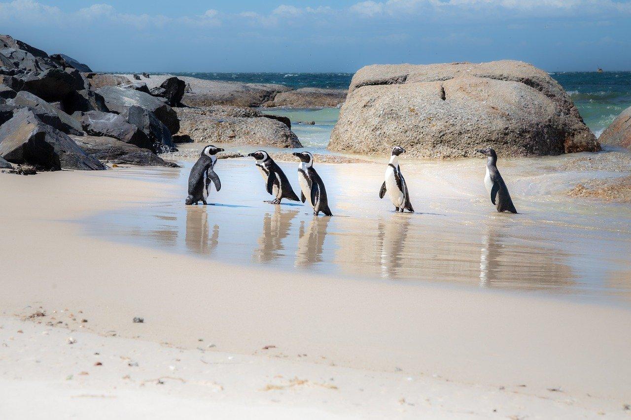200418ディベートペンギン