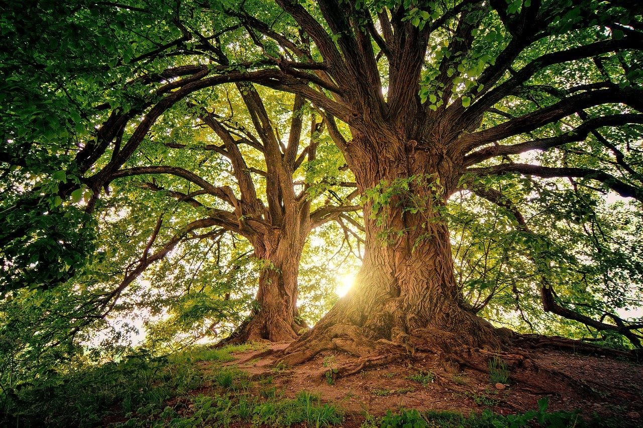 200505中国小学校樹木
