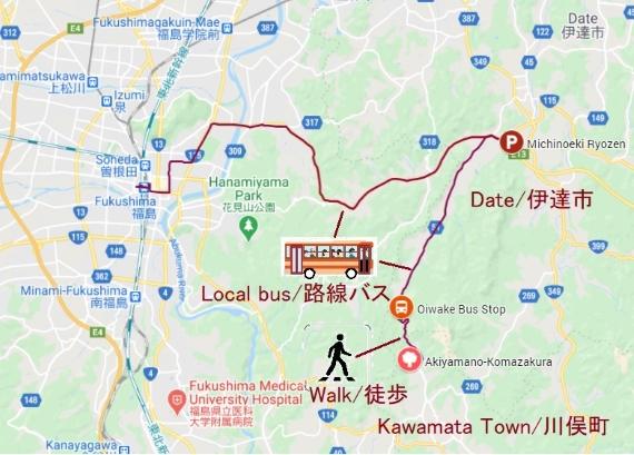 20210407秋山の駒桜_570