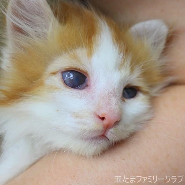 夏目と漱石 子猫里親募集中 石川 富山 福井