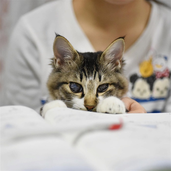 保護猫なっちゃん 石川県