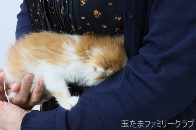 夏目と漱石 子猫里親募集中 石川 富山 福井 6/28