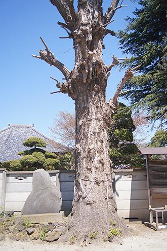 200411八坂香取稲荷合社④