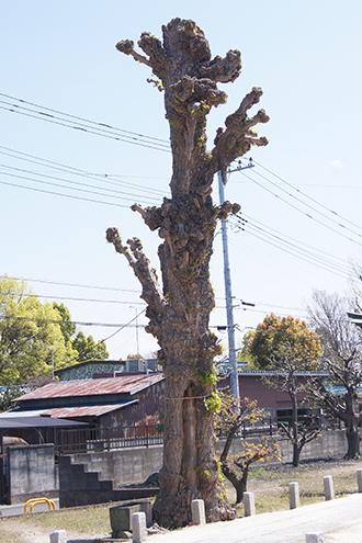 200411牛島女体神社④