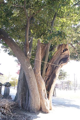 200411牛島女体神社⑨