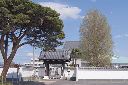 200411称名寺のイチョウ⑥