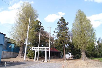 200411鹿島神社の銀杏④